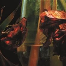 HAYVANLAR ALEMI  - CDD PSYCHEDELIA IN TIMES OF TURBULENCE