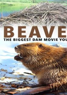 FEATURE FILM  - DVD BEAVERS
